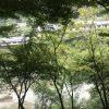 京都への旅行記②保津川下りとトロッコは楽しめない