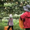 丹後半島で梨狩りとぶどう狩りを満喫する子どもたち!