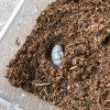 めっちゃでかい!カブトムシの幼虫のマット交換に挑戦!